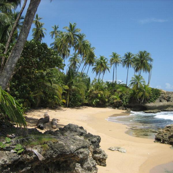 Refugio Nacional de Vida Silvestre Gandoca-Manzanillo - Manzanillo - Costa Rica