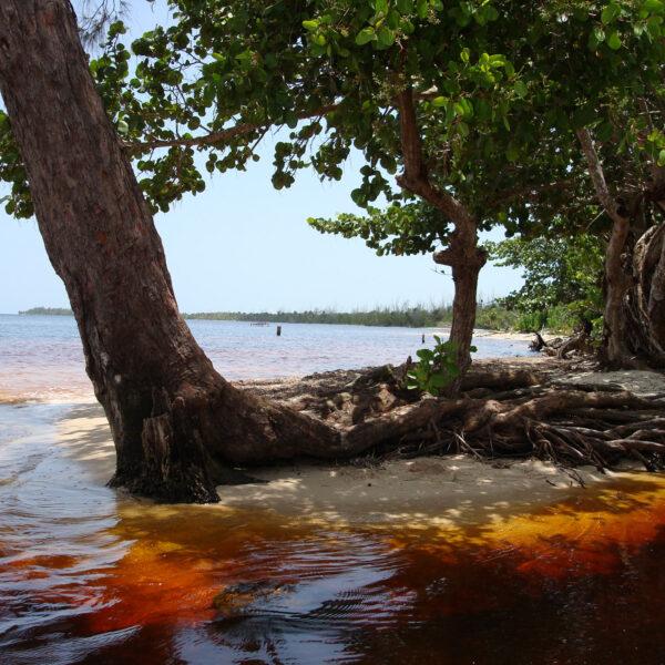 Varkensbaai - Playa Larga - Cuba
