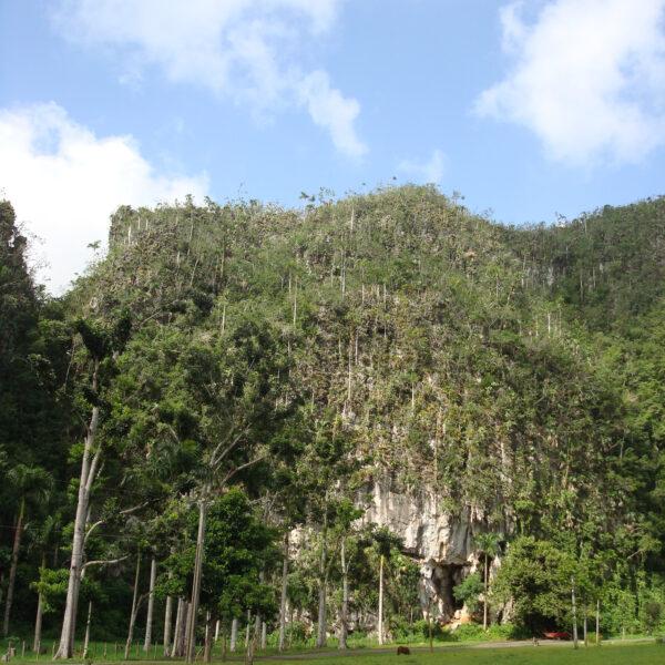 Mogotes - Valle de Viñales - Cuba
