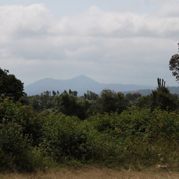 Mount Kenya National Park - Kenia