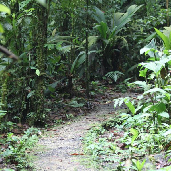Parque Nacional Braulio Carrillo - Costa Rica