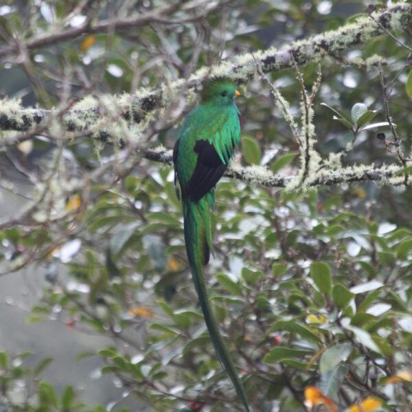 Parque Nacional Los Quetzales - Costa RIca