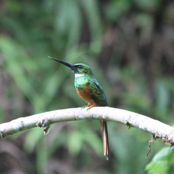 Parque Nacional Piedras Blancas - Costa Rica