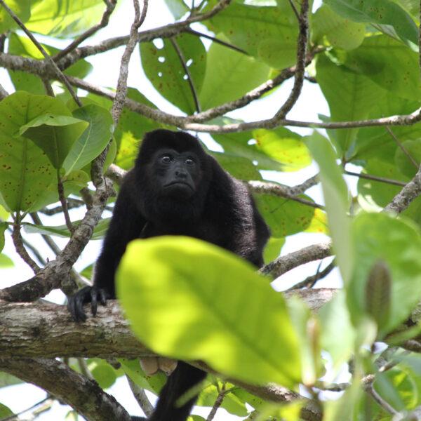 Parque Nacional Tortuguero - Tortuguero - Costa Rica