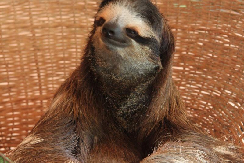 Sloth Sanctuary - Cahuita - Costa Rica