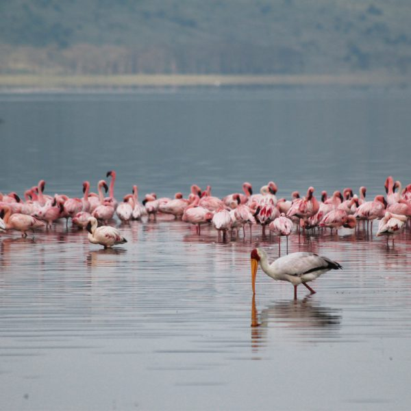 Lake Nakuru National park - Kenia