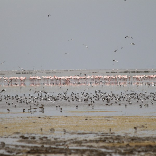 Mto Wa Mbu - Tanzania
