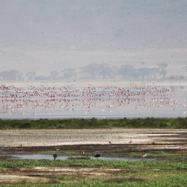 Ngorongoro krater - Tanzania