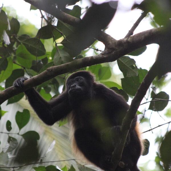 Parque Nacional Cahuita - Cahuita - Costa Rica