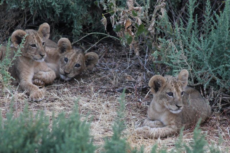 Bescherm wilde dieren
