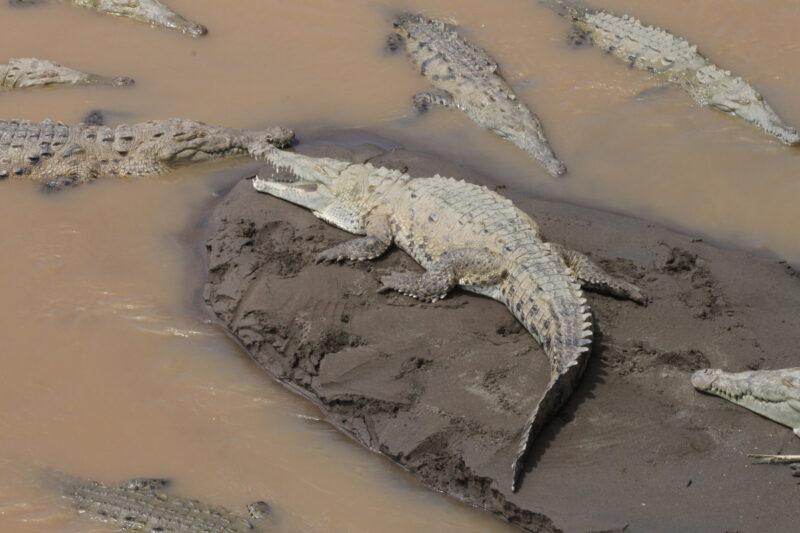 Río Grande de Tárcoles - Tárcoles - Costa Rica