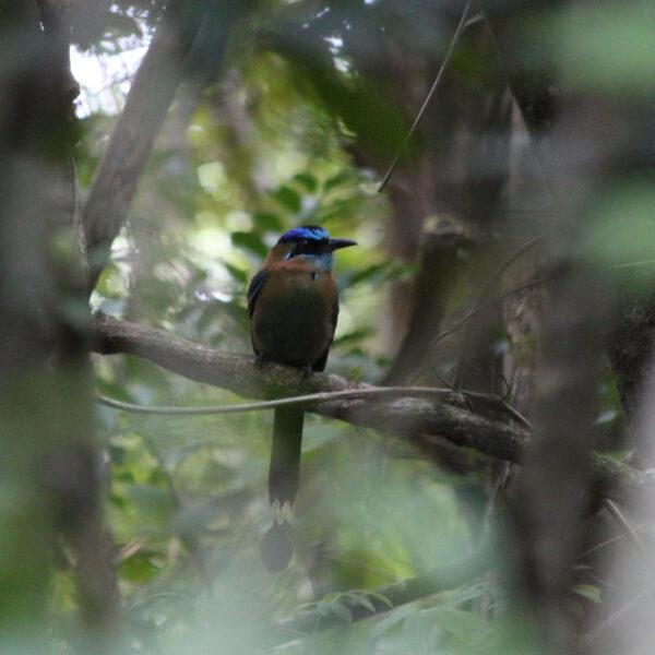 Parque Nacional Rincón de la Vieja - Costa Rica