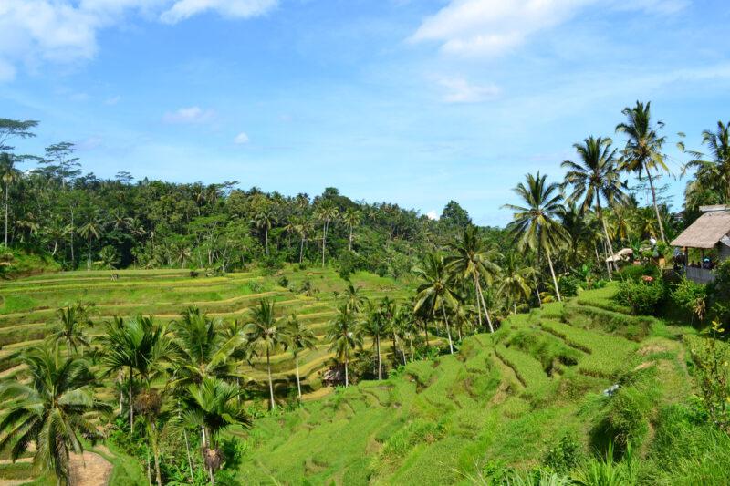 Tetebatu - Lombok