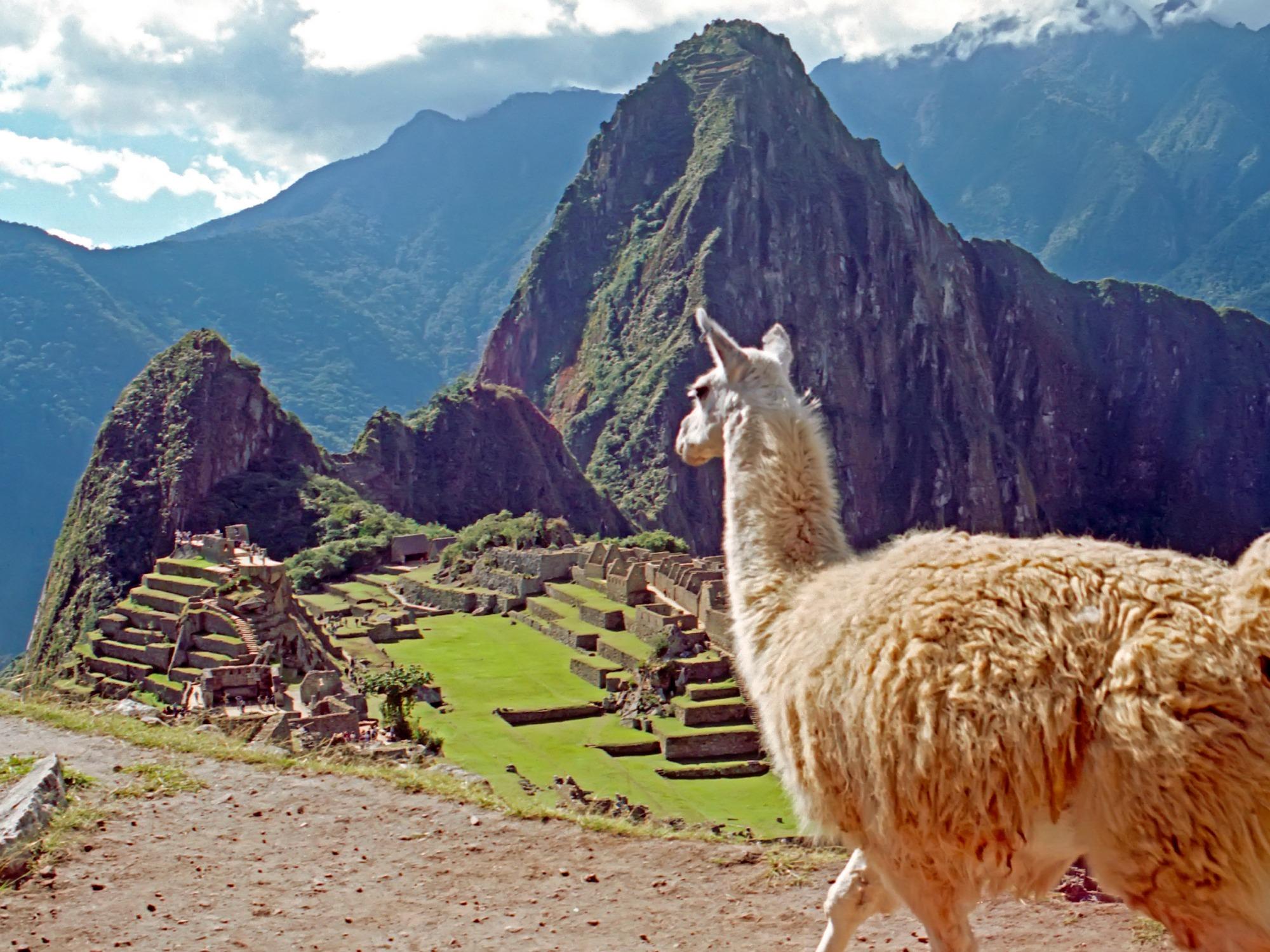 Peru reis - Lama bij Machu Picchu