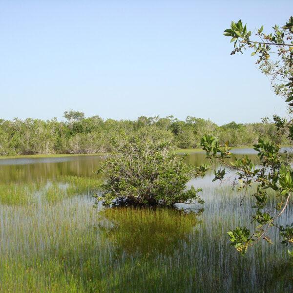 Top 5 gebieden in Cuba die je echt bezocht moet hebben: Penísula de Zapata