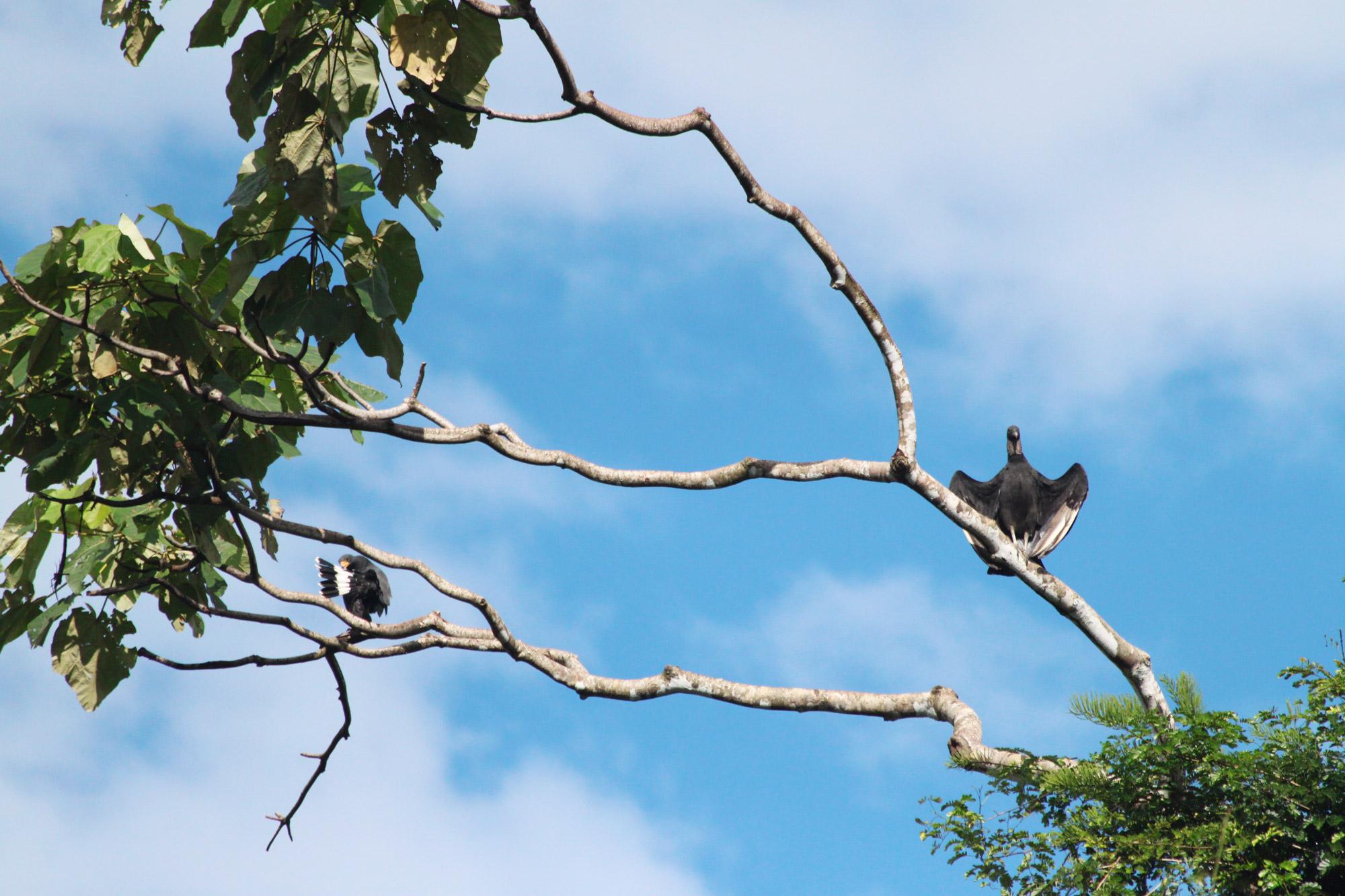 Costa Rica 2014 - dag 16 - Parque Nacional Corcovado