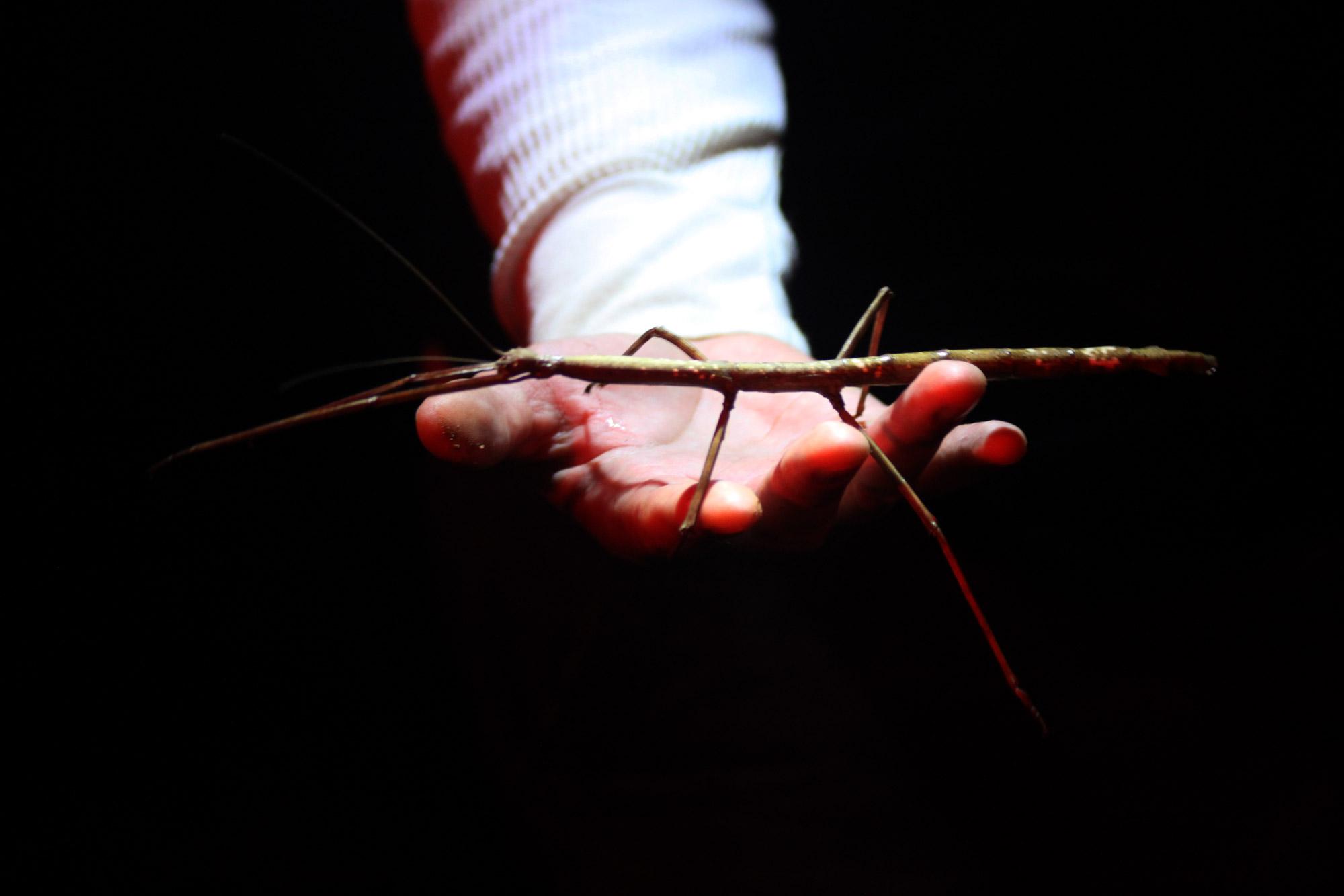 Costa Rica 2014 - dag 16 - The Bug lady