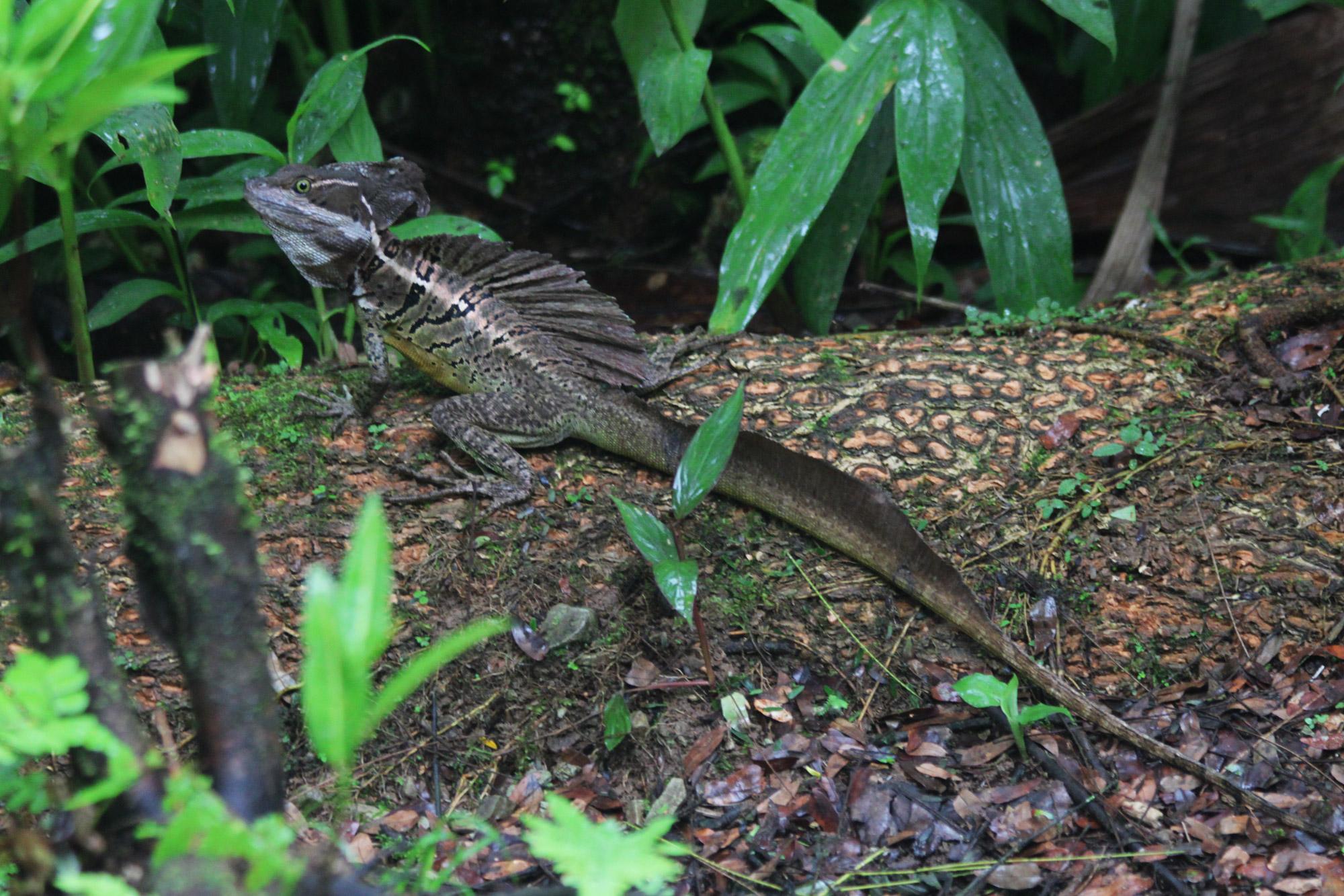 Costa Rica 2014 - dag 19 - Parque Nacional Piedras Blancas