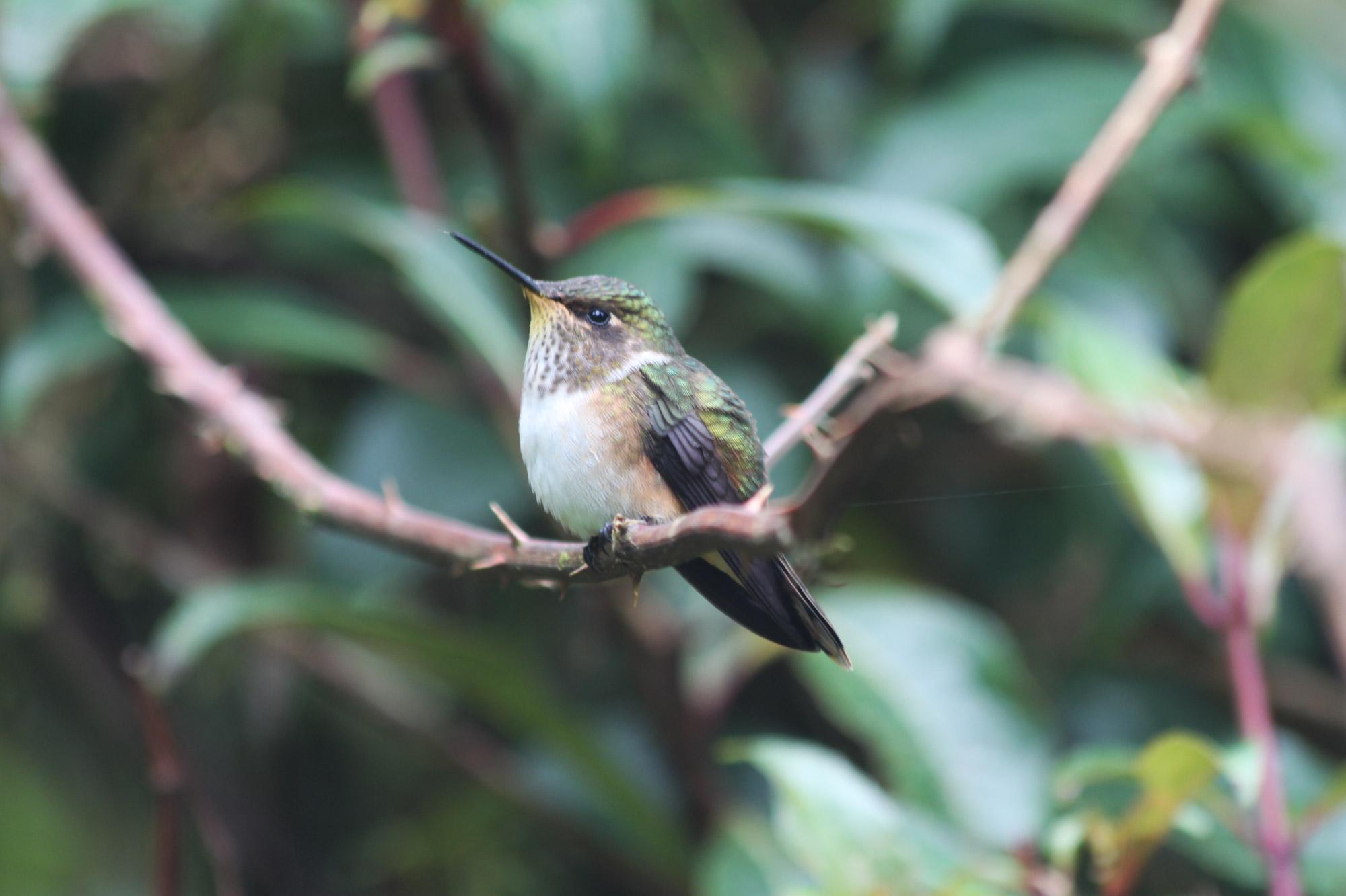 Costa Rica 2014 - dag 21 - Parque Nacional los Quetzales