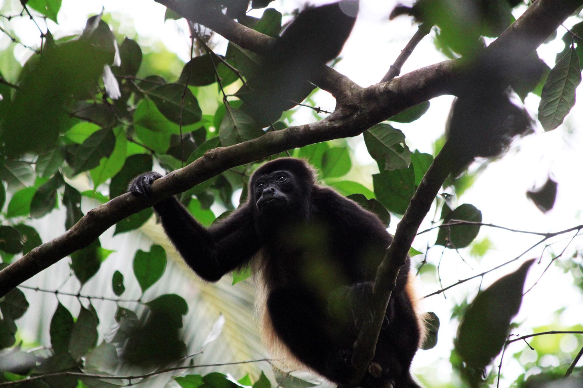 Costa Rica 2014 - dag 3 - Parque Nacional Cahuita
