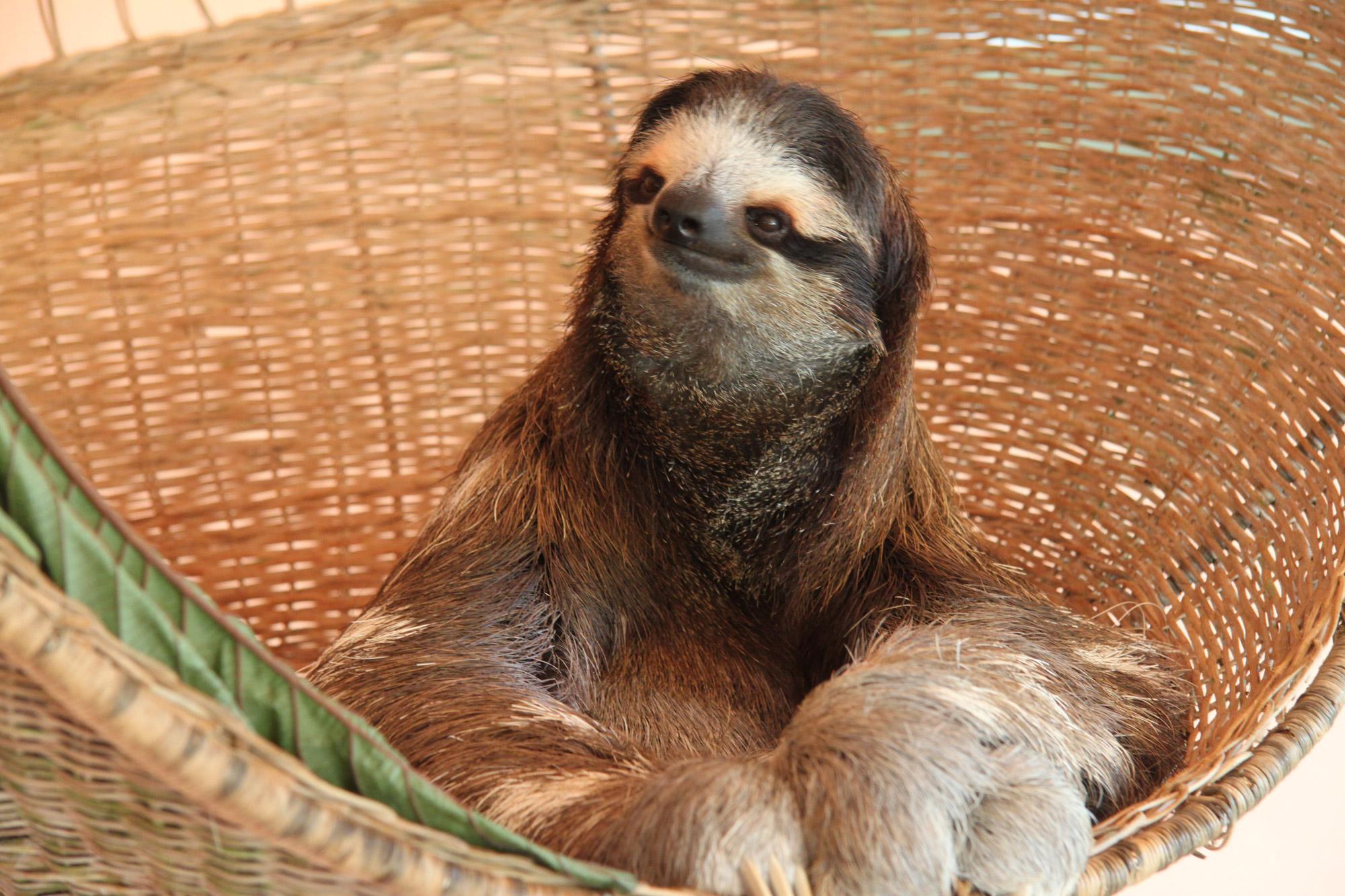 Costa Rica 2014 - dag 3 - Sloth Sanctuary