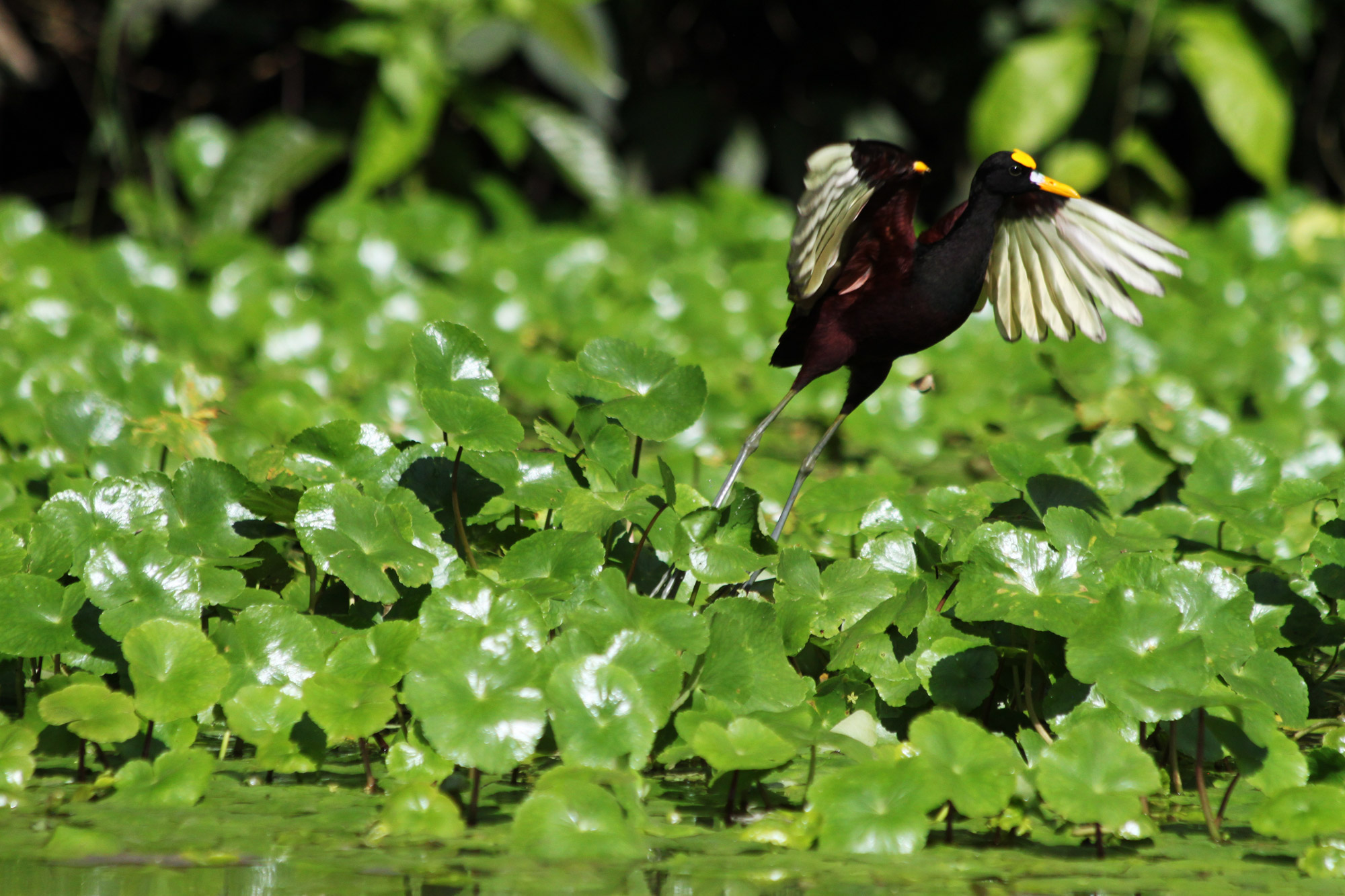Costa Rica 2014 - dag 5 - Parque Nacional Tortuguero per boot