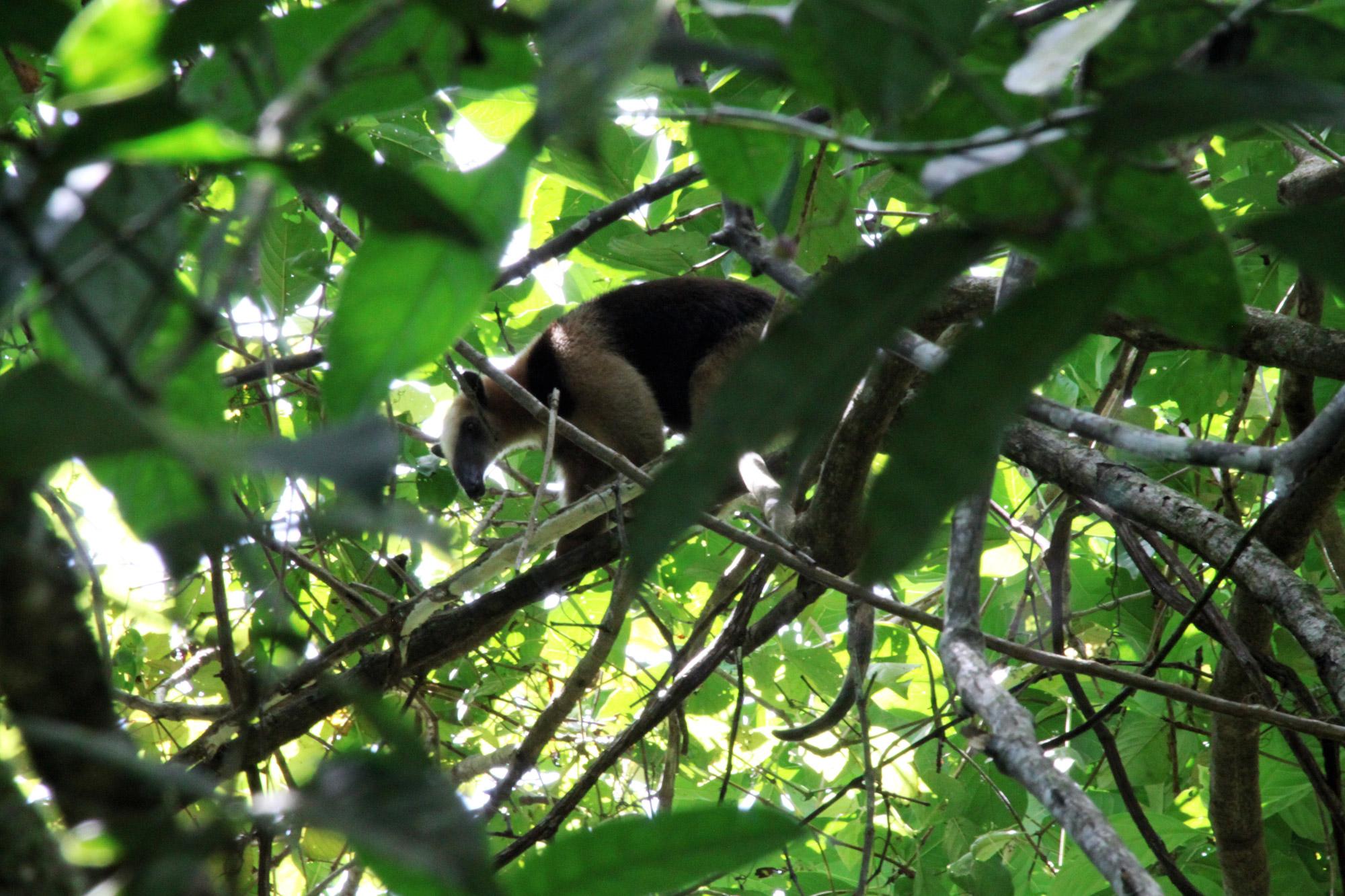 Costa Rica 2014 - dag 5 - Parque Nacional Tortuguero
