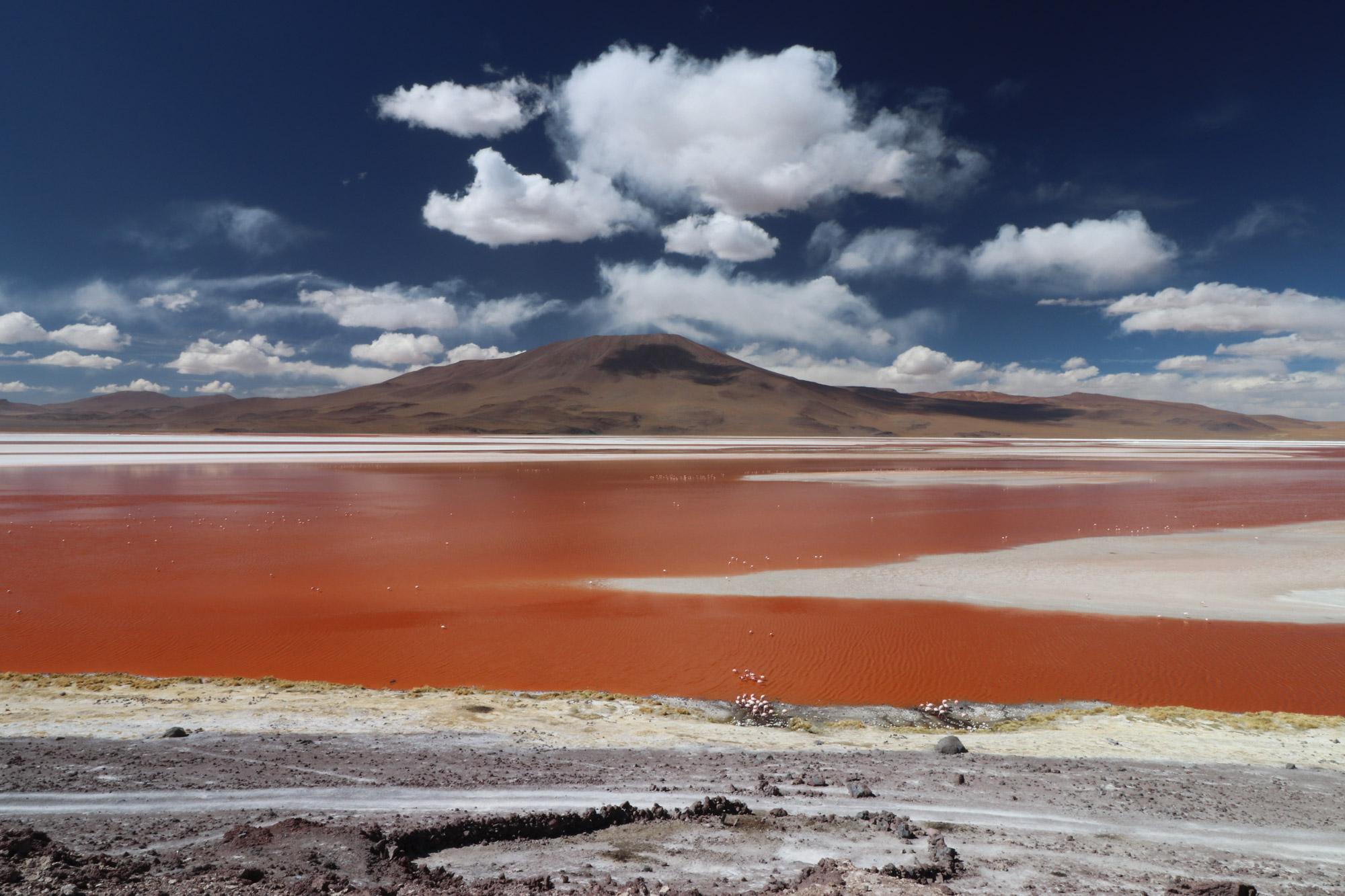 De 5 mooiste reismomenten van 2016 - De mooie kleuren van Laguna Colorada