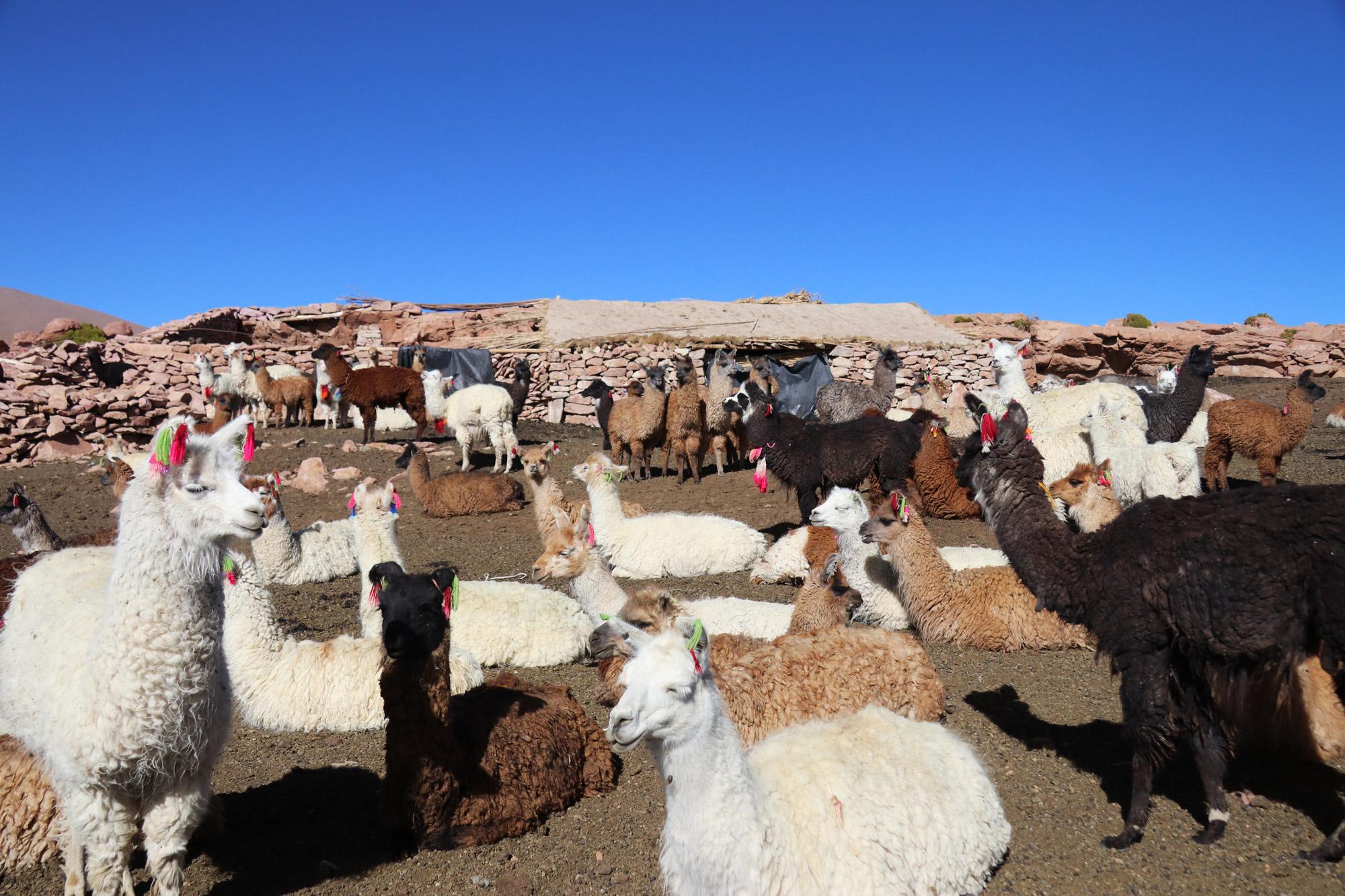 Reisverslag Bolivia: Four Days Of Fantasy Tour - Lamaboerderij in Quetana Grance