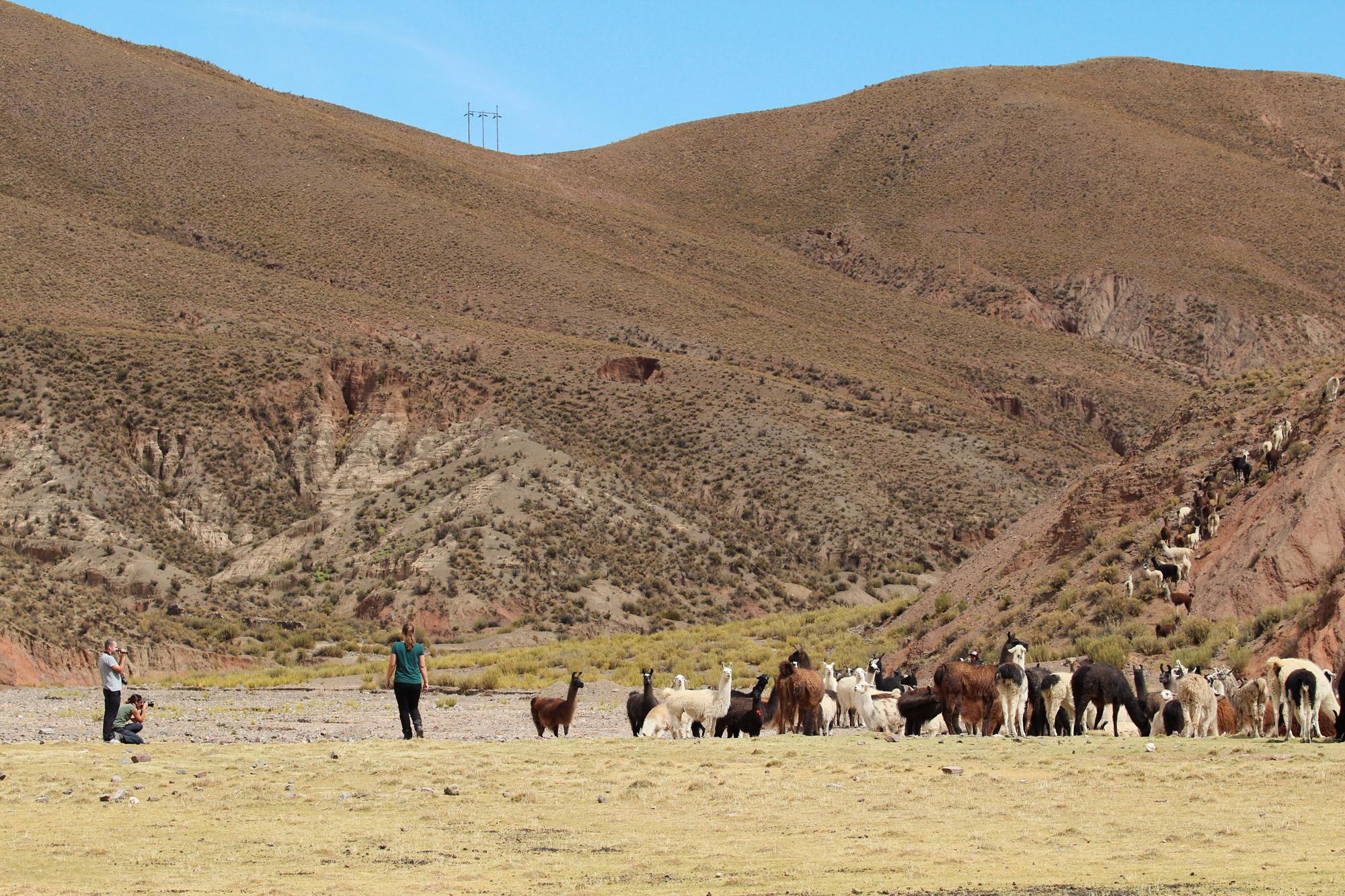 Reisverslag Bolivia: Four Days Of Fantasy Tour - Lama's bij Nazarenito