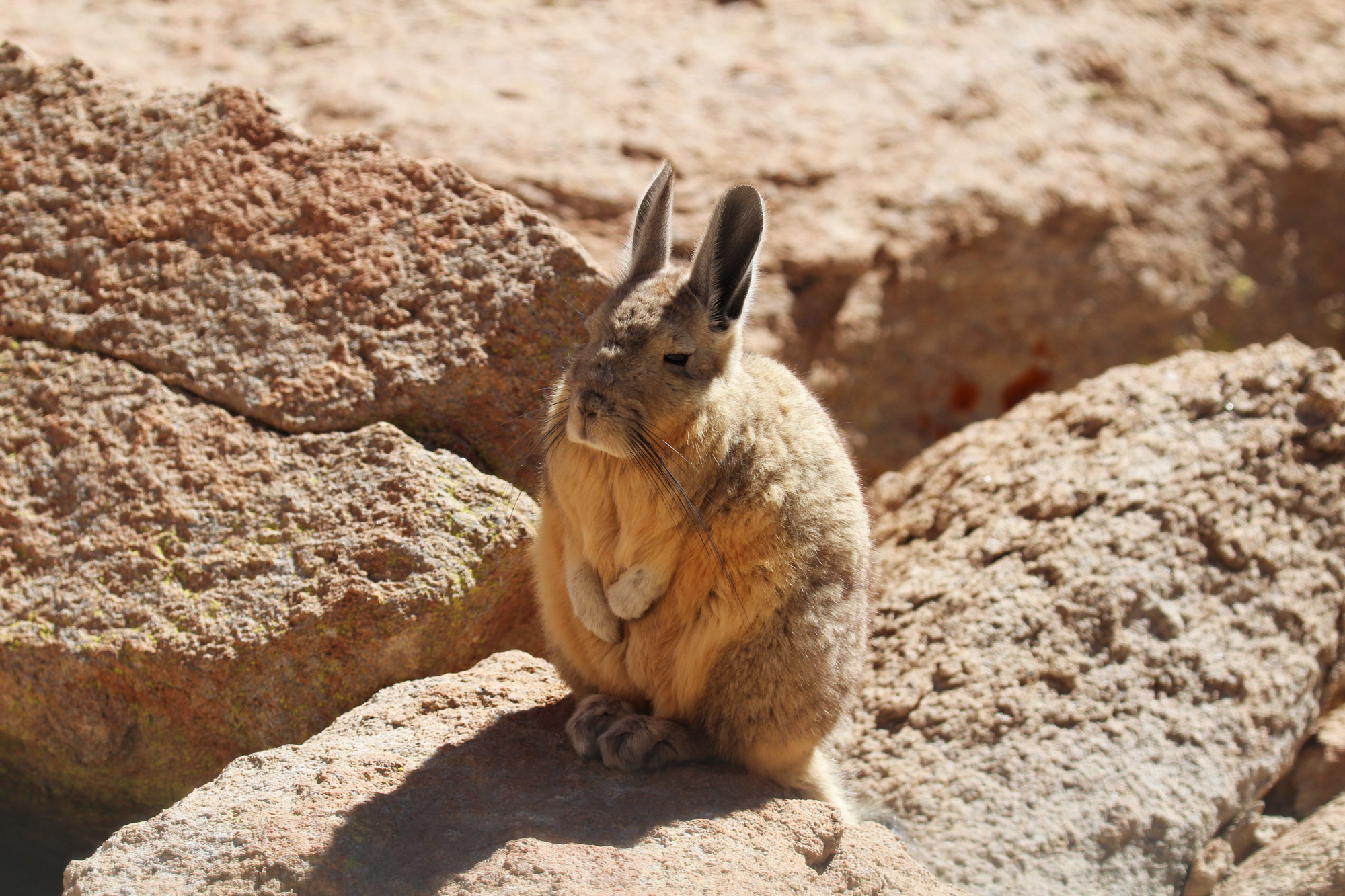 Reisverslag Bolivia: 's wereld grootste zoutvlakte - Cuvierhaasmuis