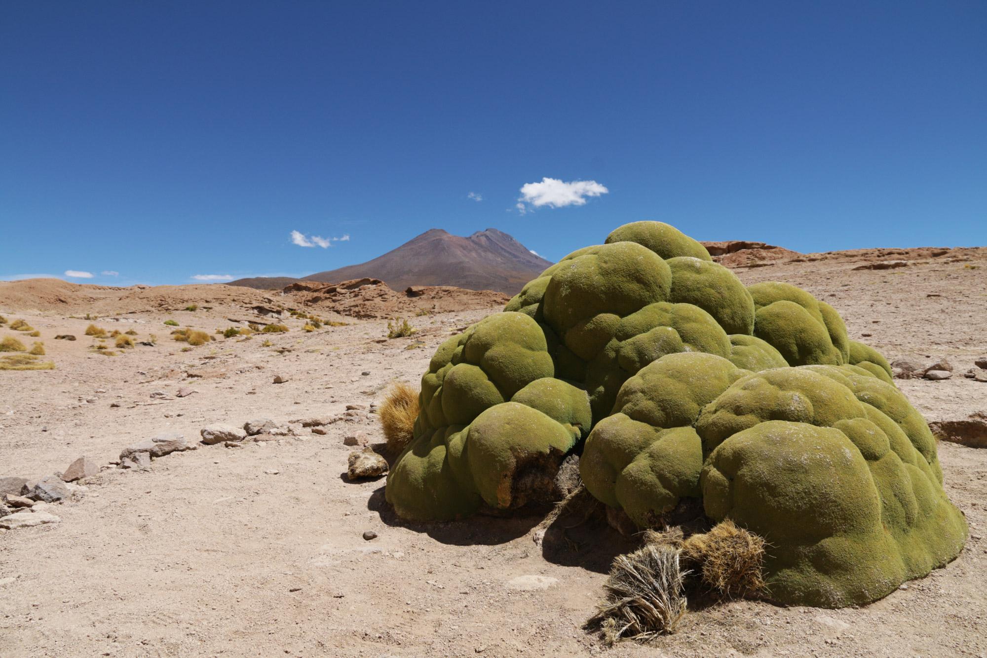 Reisverslag Bolivia: 's wereld grootste zoutvlakte - Bijzonder mos