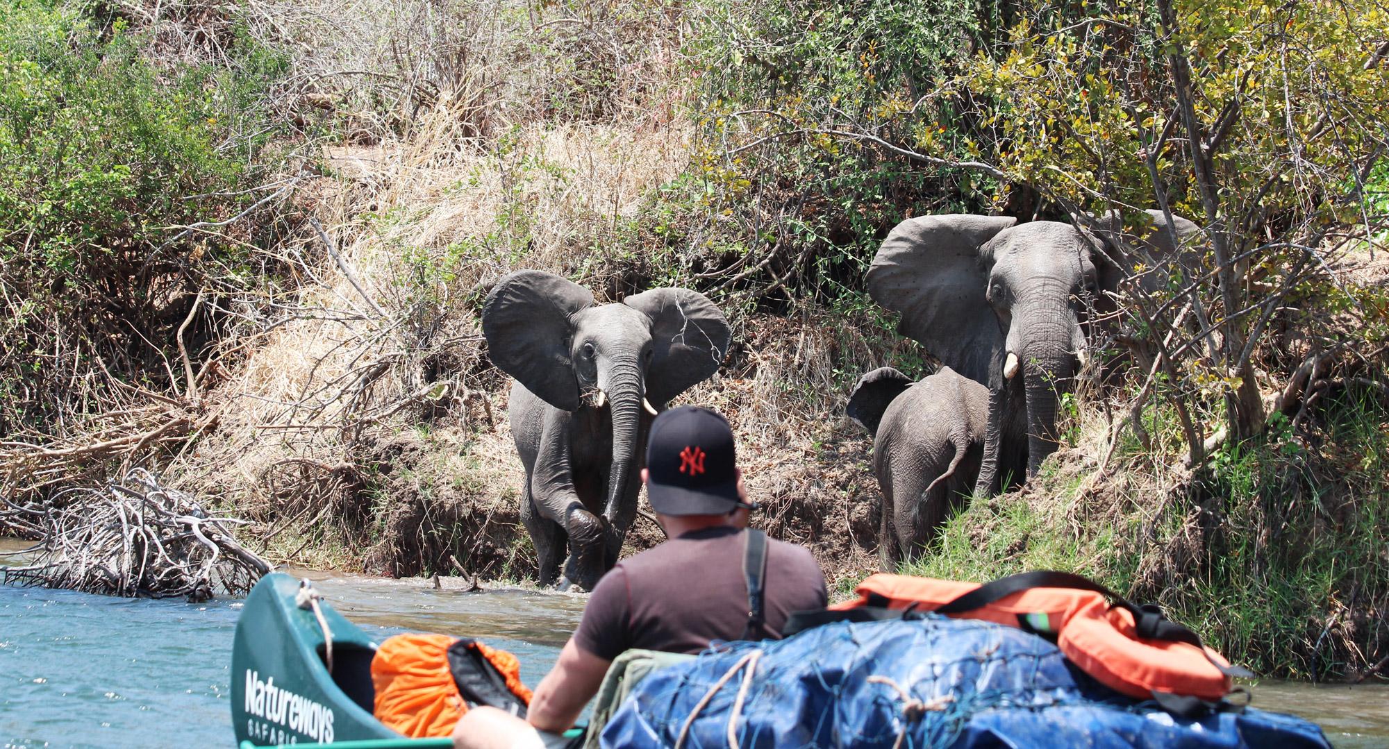 Slalommen om nijlpaarden - een avontuur op de machtige Zambezi rivier - Oog in oog met olifanten