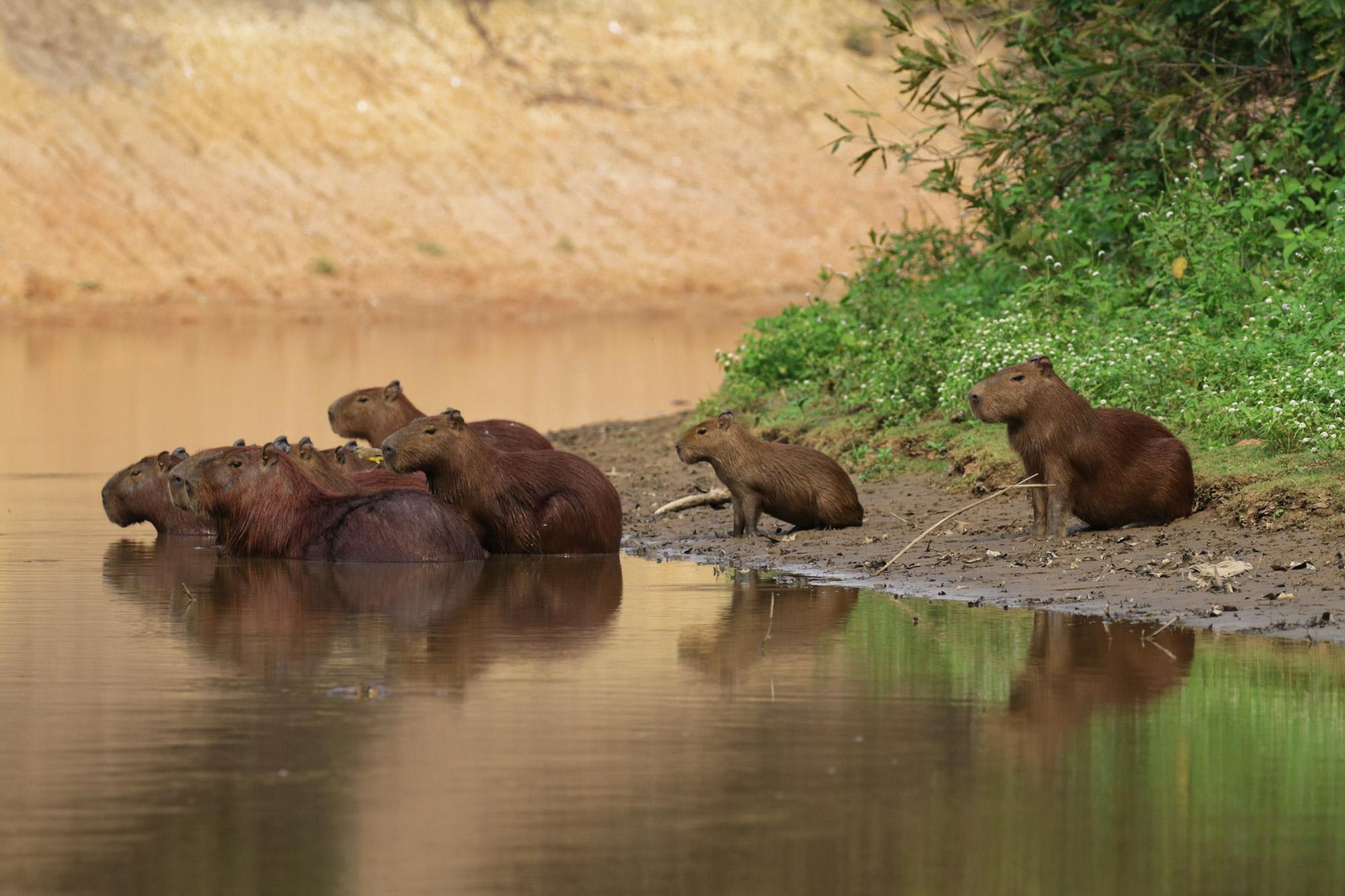 reisverslag bolivia de wetlands van bolivia