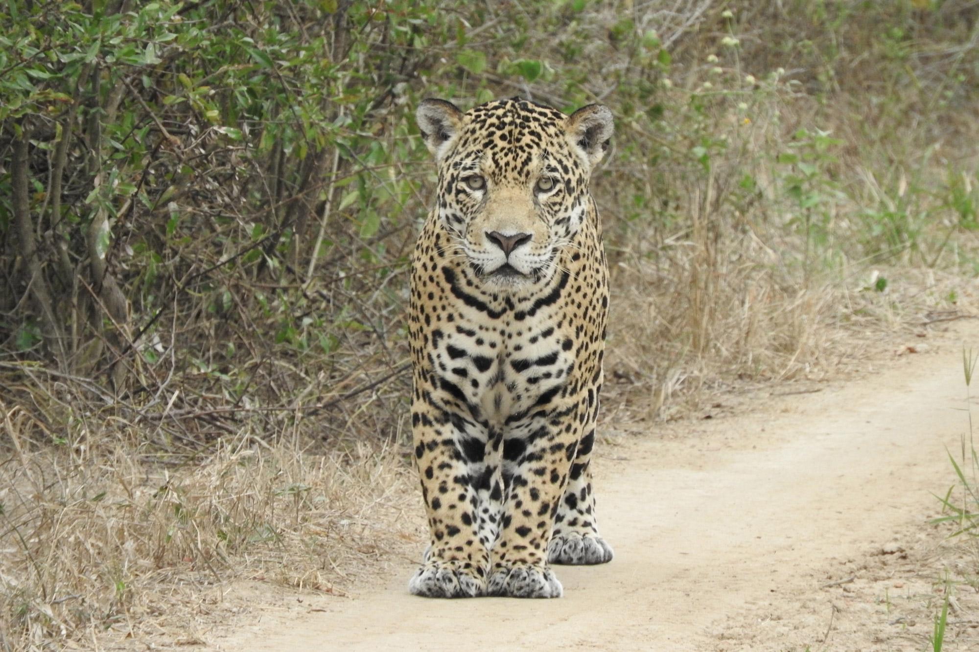 Beste plekken in Bolivia om wildlife te spotten: Kaa-Iya National Park