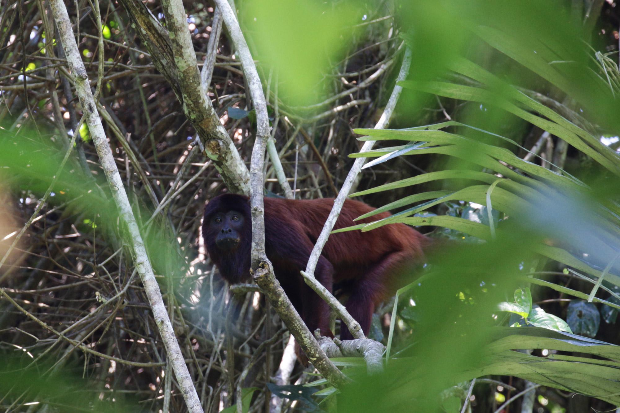 Beste plekken in Bolivia om wildlife te spotten: Madidi