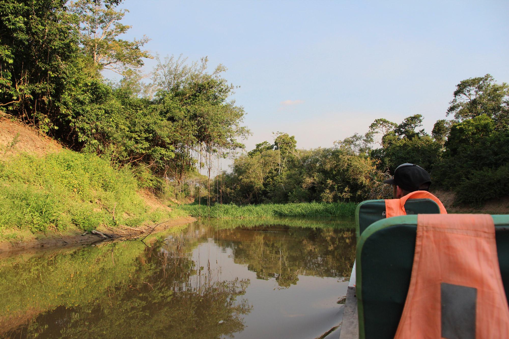 Beste plekken in Bolivia om wildlife te spotten: Pampas