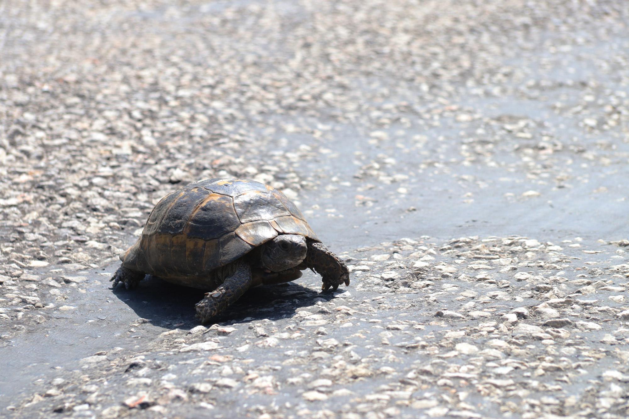 Turkije reisverslag: Bergama en Ayvalik - Een schildpad op de weg