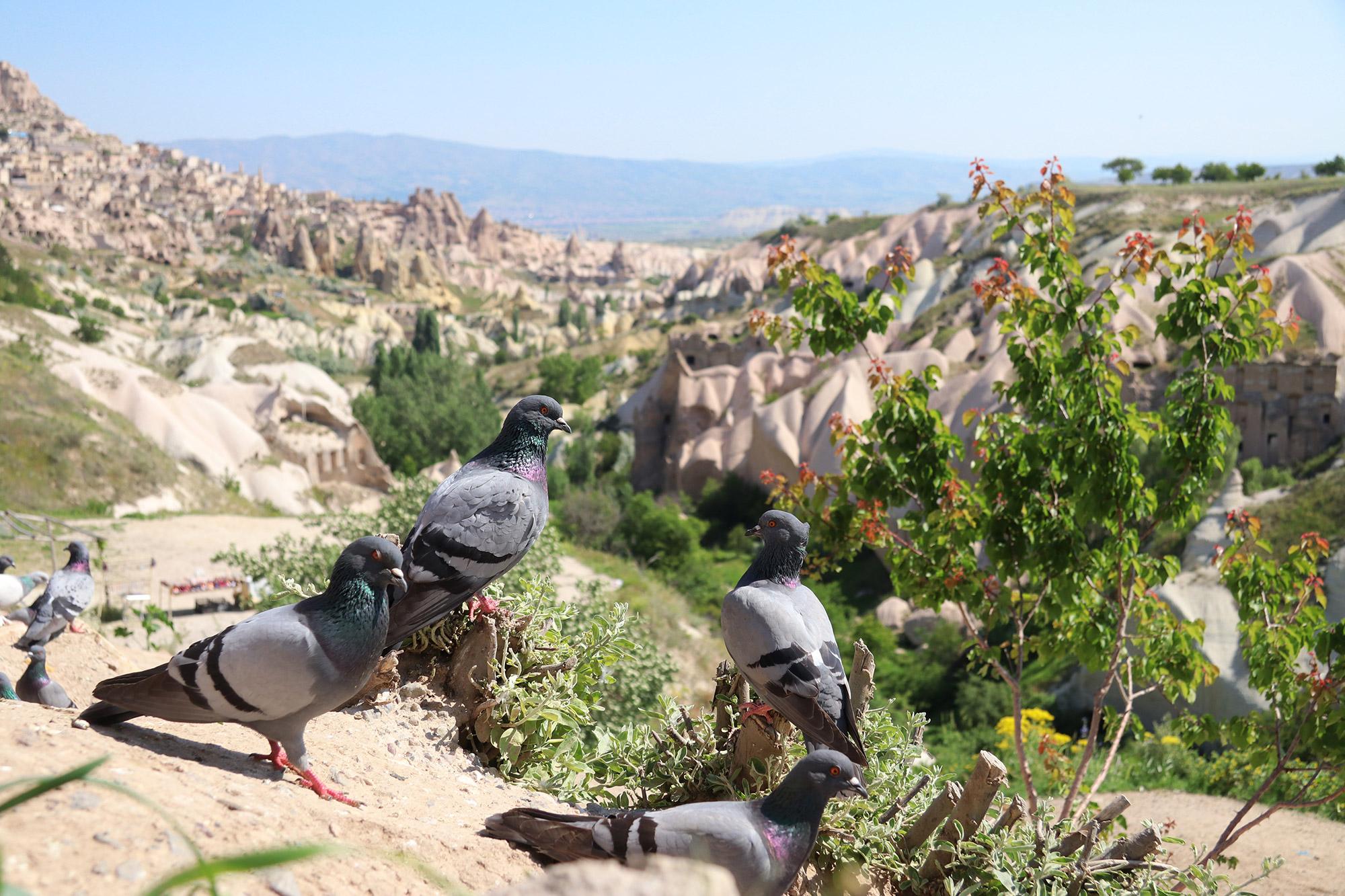 Turkije reisverslag: Magische ballonvaart - Pigeon Valley