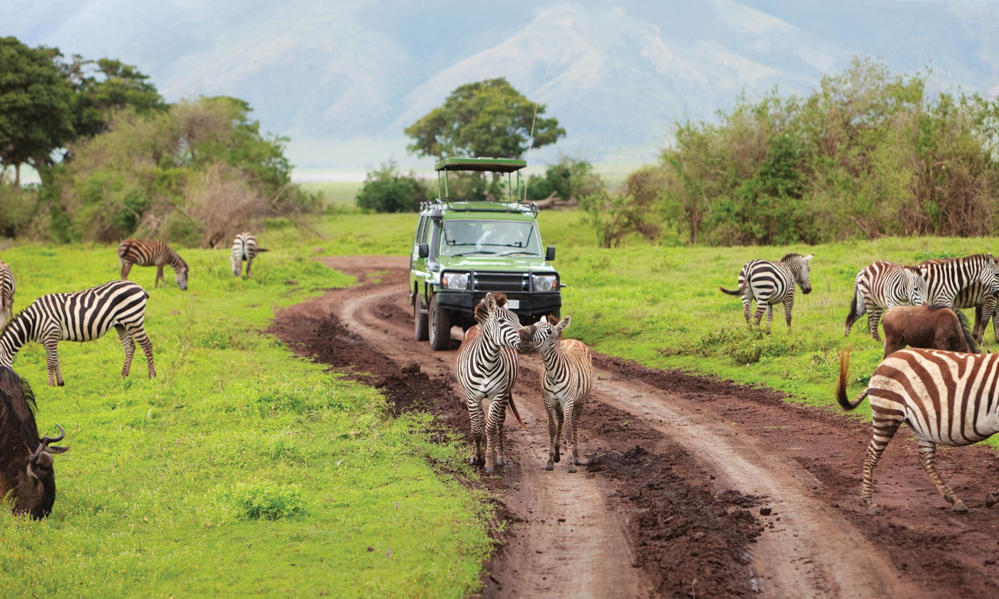 5 bezienswaardigheden die je gezien moet hebben in Tanzania - Serengeti