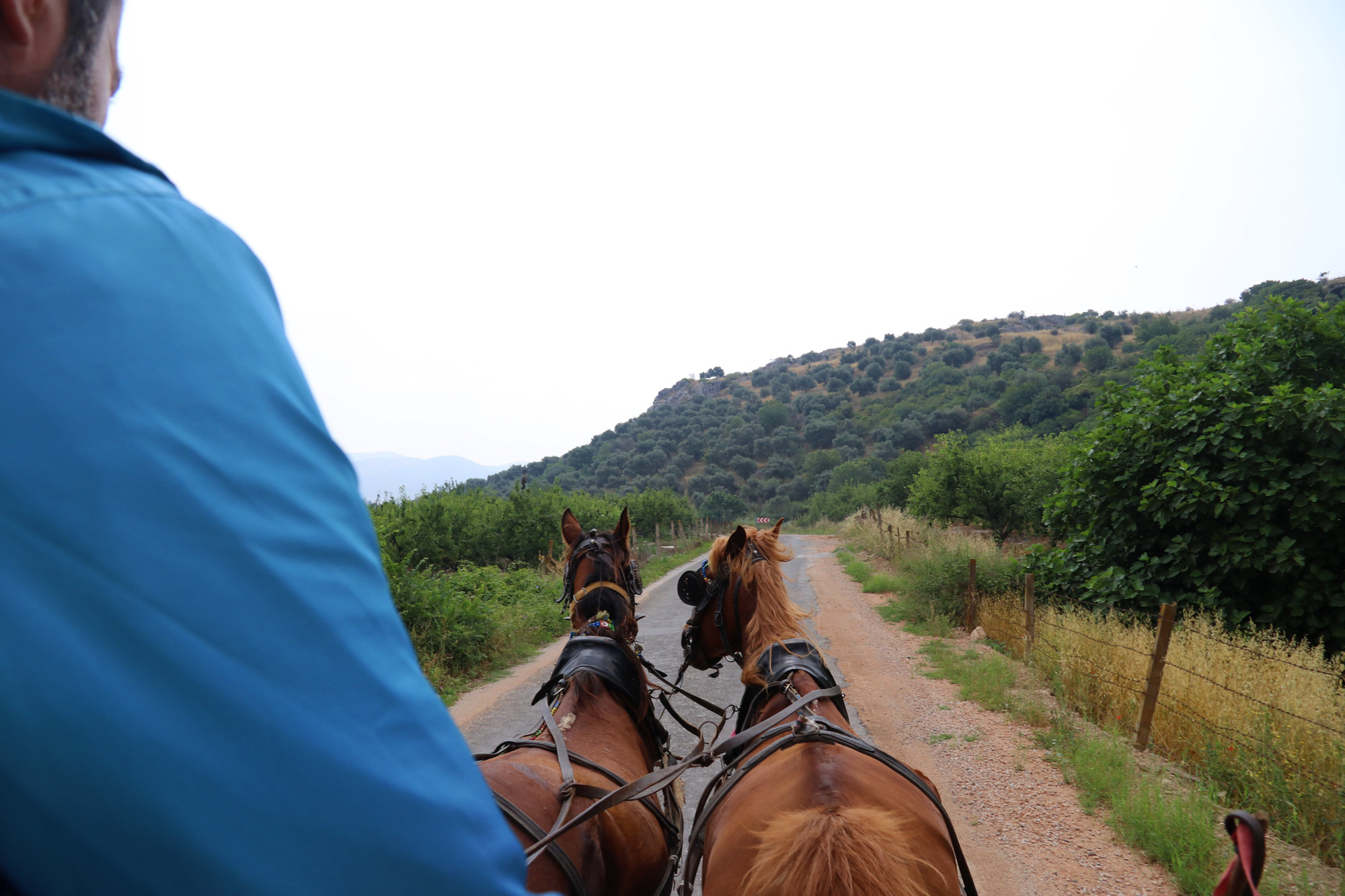 Turkije reisverslag: Efeze en Şirince - Met paard en wagen naar de ingang van Efeze