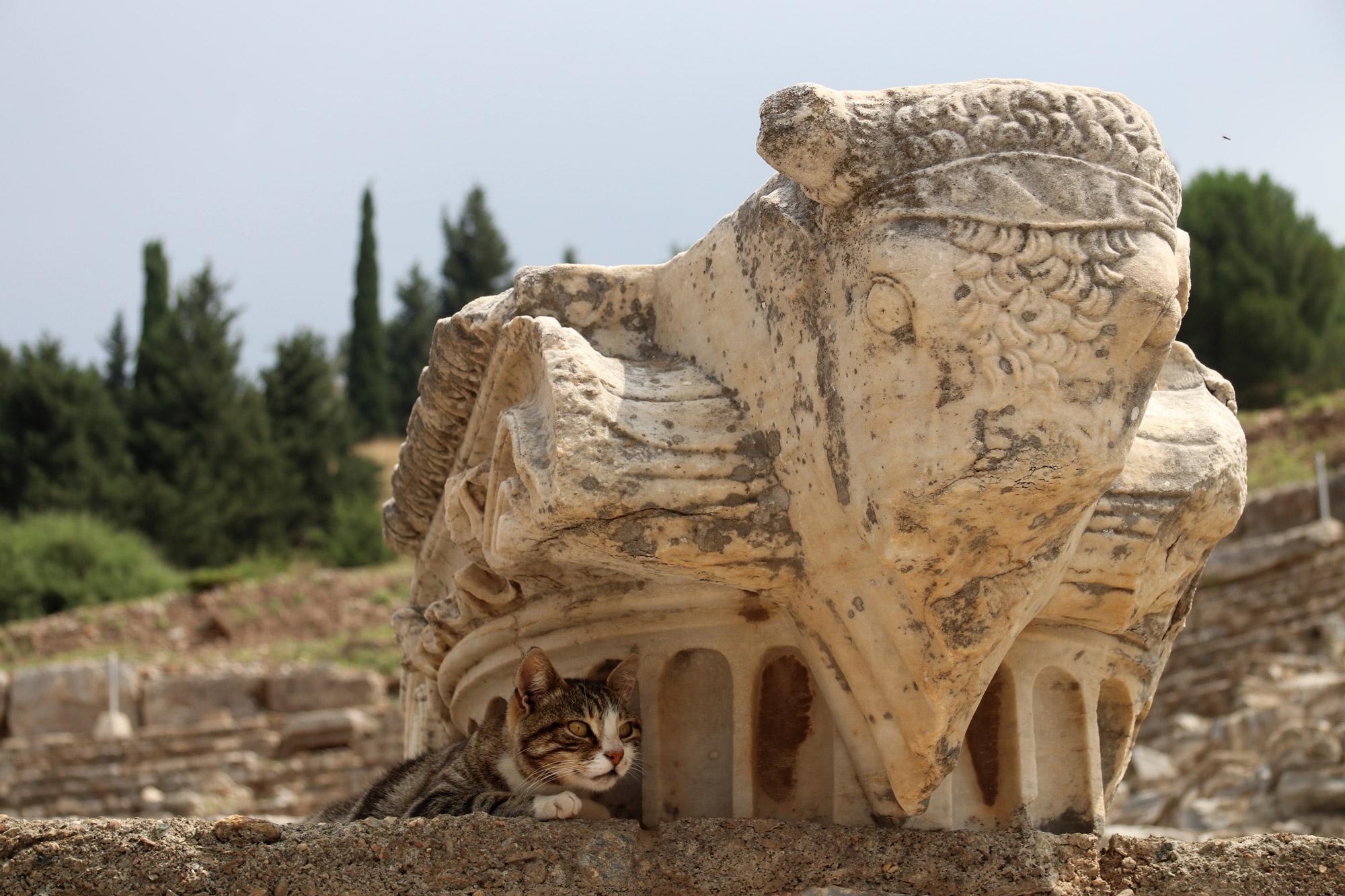 Turkije reisverslag: Efeze en Şirince - Zwerfkatten bij Efeze