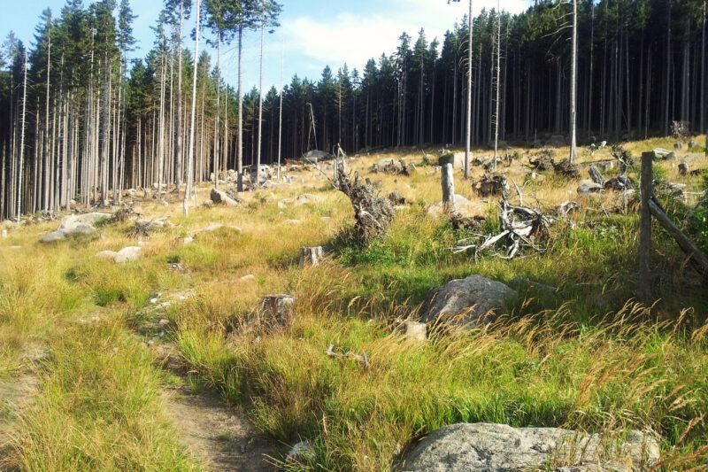 Actieve vakantie in het Duitse Harz