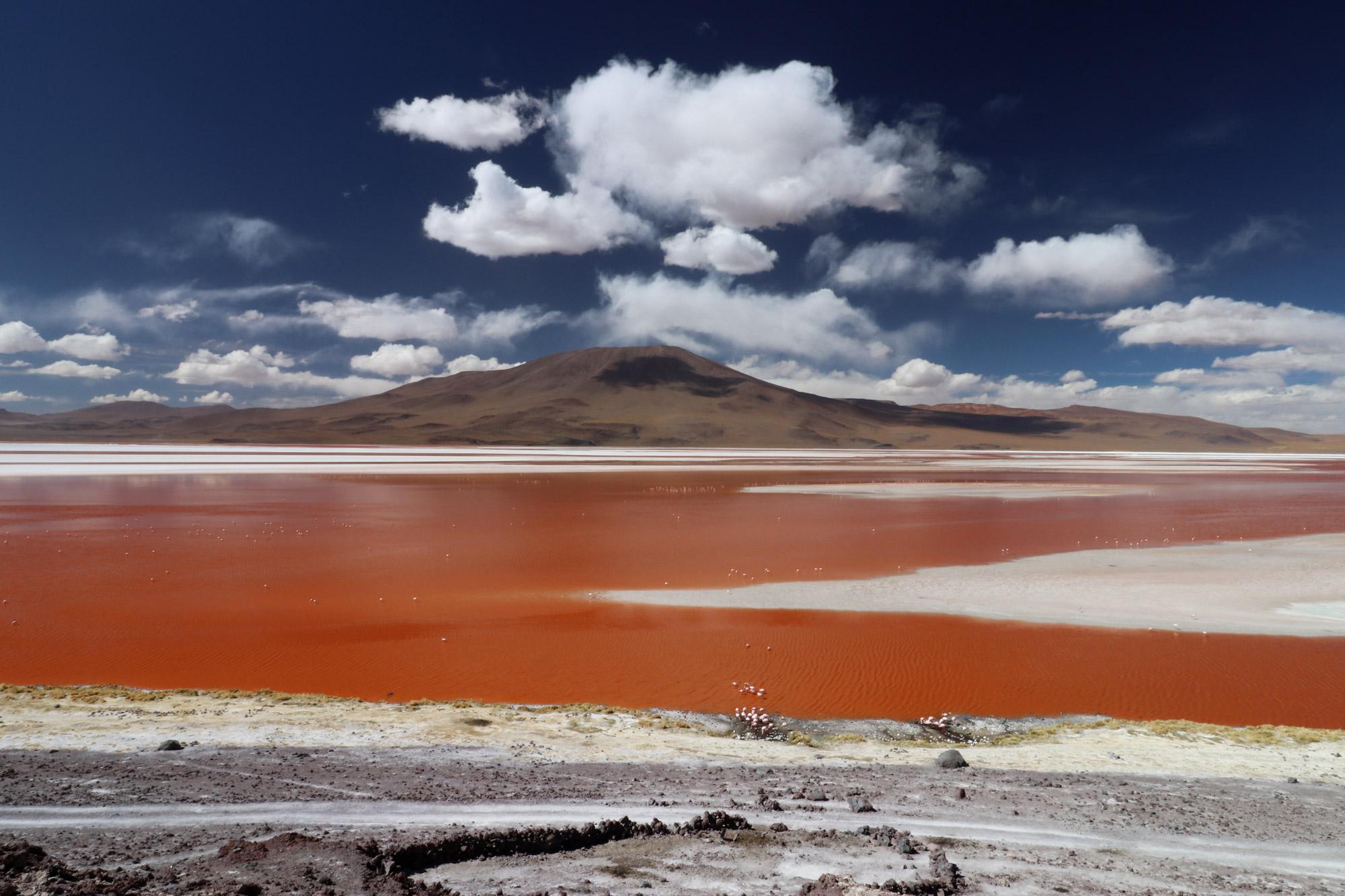 Bolivia 2016 - Dag 10 - Laguna Colorada