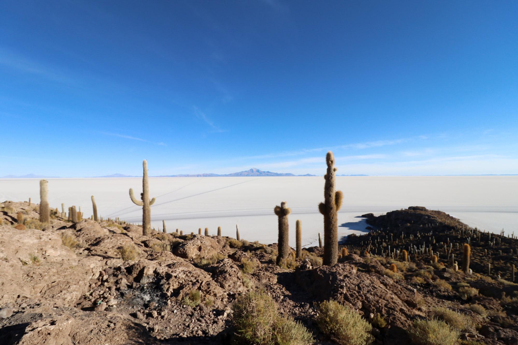 Bolivia 2016 - Dag 12 - Cactuseiland Isla Incahuas