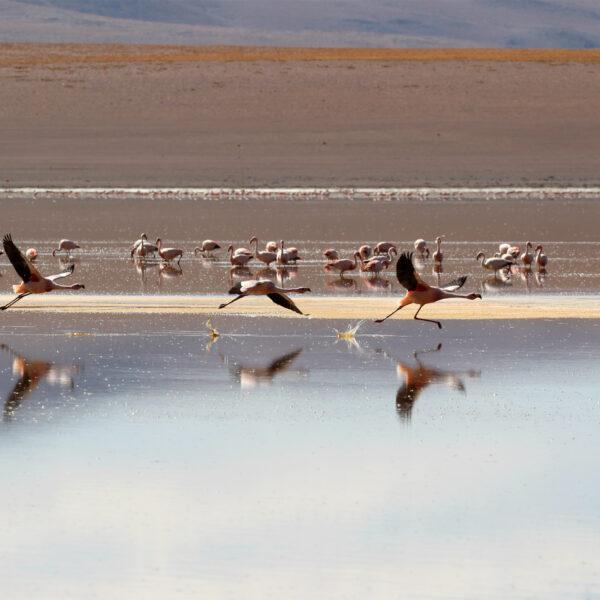 Laguna Hedionda Sur - Potosí Department - Bolivia