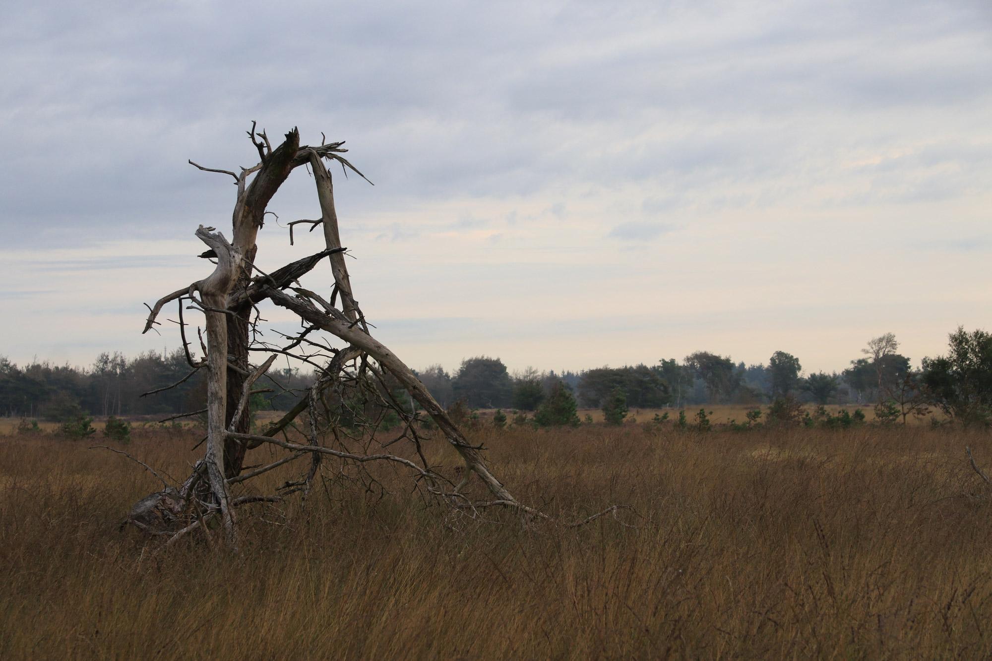 Ochtendwandeling op de Strabrechtse Heide