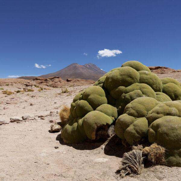 Volcán Ollagüe- Potosí Department - Bolivia
