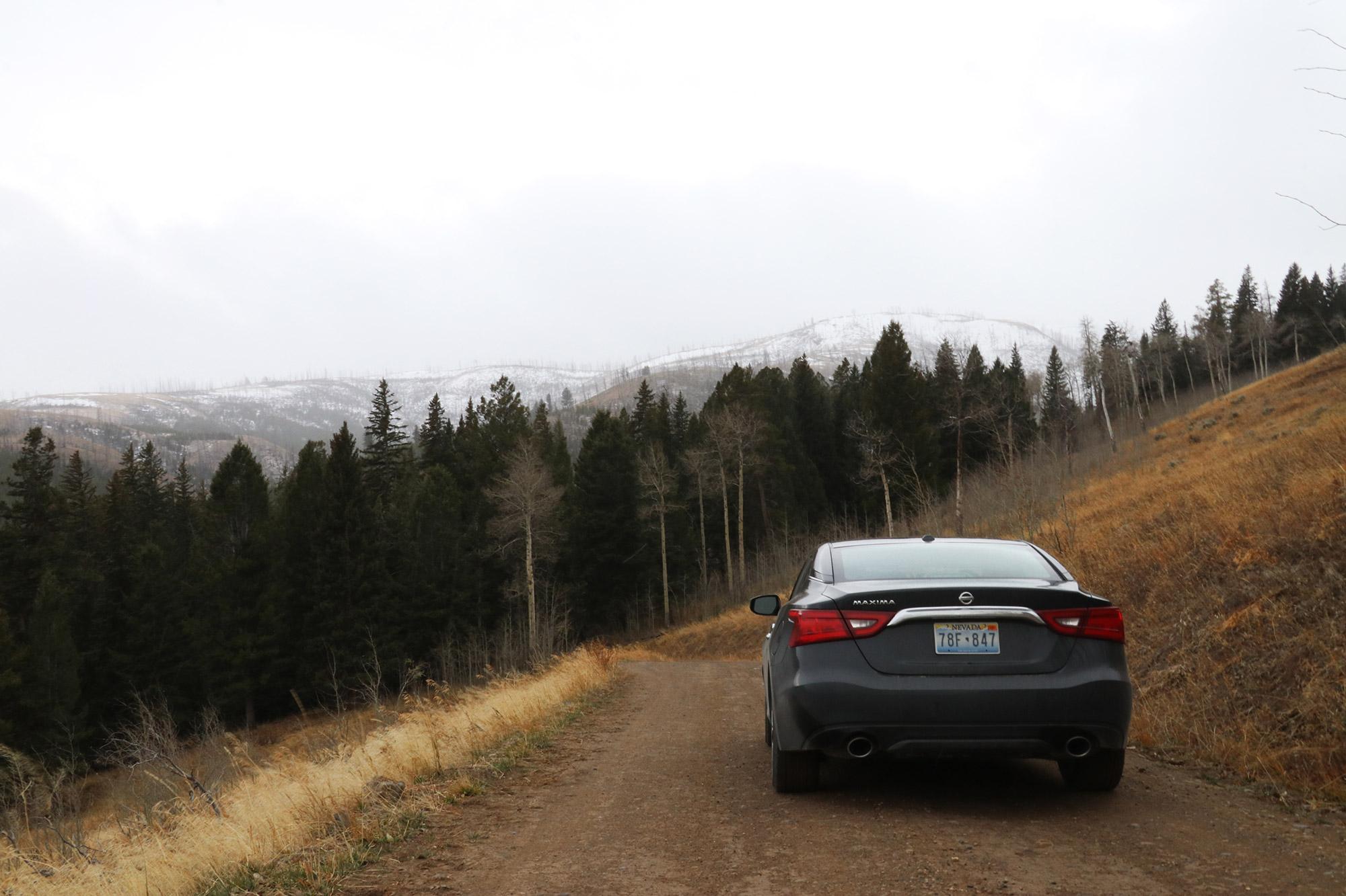 Amerika dag 4 - Yellowstone National Park - Blacktail Plateau Drive