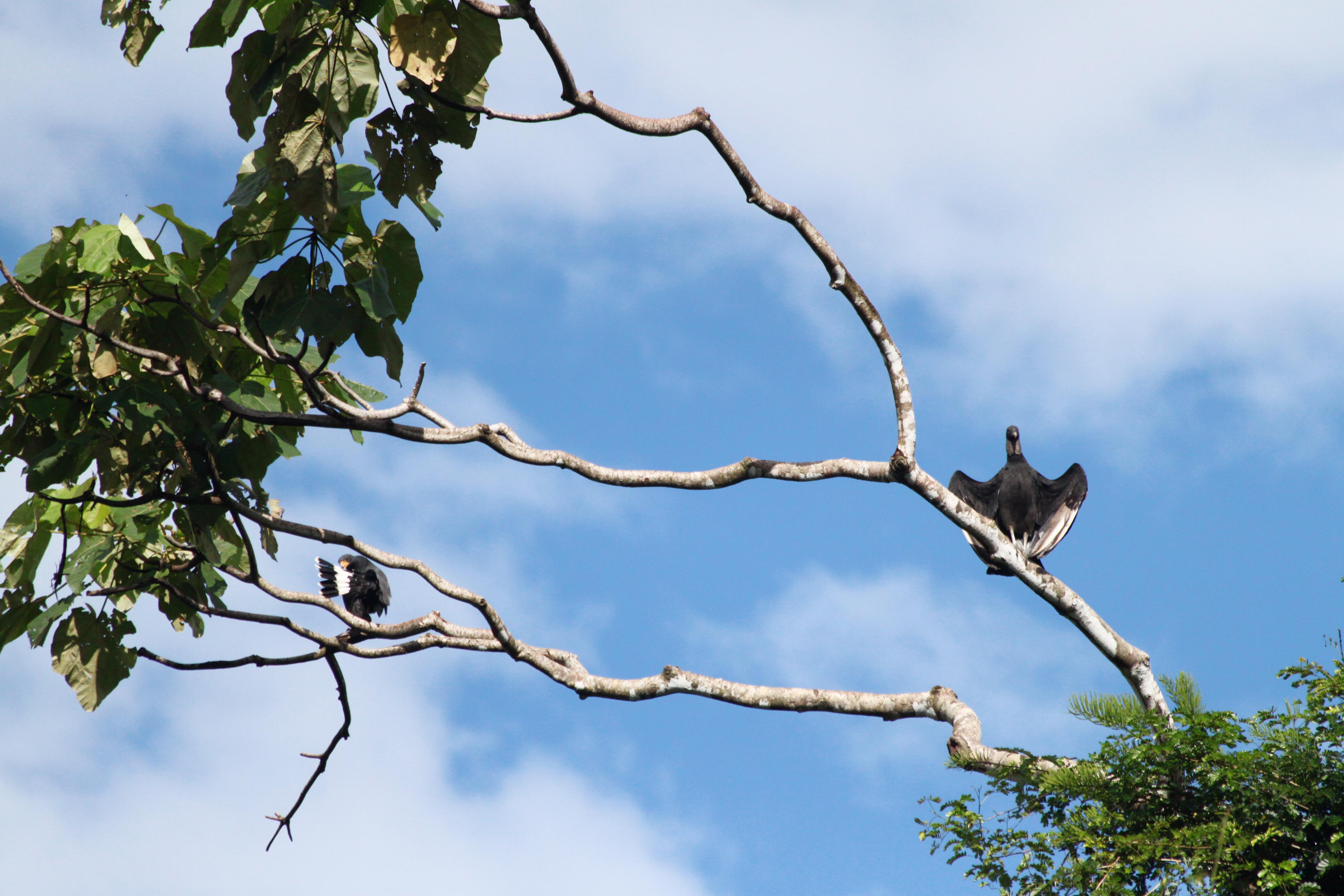 Onze favoriete nationale parken van Costa Rica - Parque Nacional Corcovado